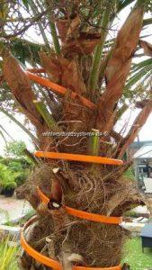 Pflanzenheizung, Pflanzenheizkabel für eine sichere und erfolgreiche Überwinterung von Pflanzen