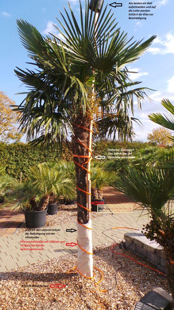 Palmen Winterschutz Aufbauanleitung