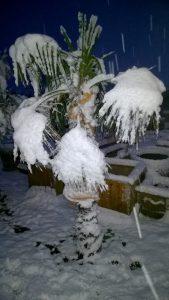 Palme ohne Palmen Winterschutz
